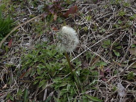 春の兆し、いろいろ。_a0123836_16545902.jpg