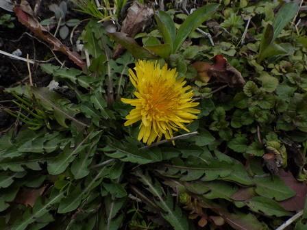 春の兆し、いろいろ。_a0123836_16545945.jpg