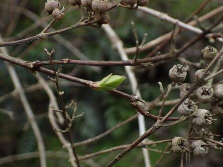 春の兆し、いろいろ。_a0123836_16550048.jpg