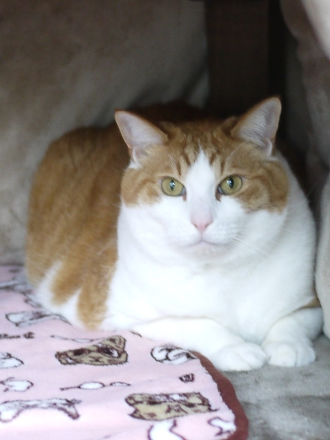 猫のお留守番 あずきくん編。_a0143140_22302702.jpg