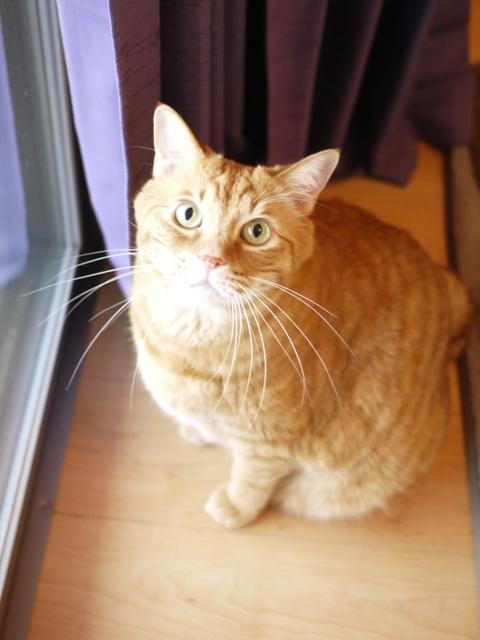 猫のお留守番 きなこくん編。_a0143140_22350788.jpg