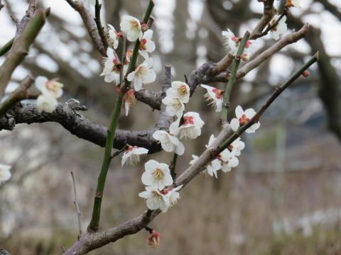 ✿春の装い❀_a0217348_19380830.jpg