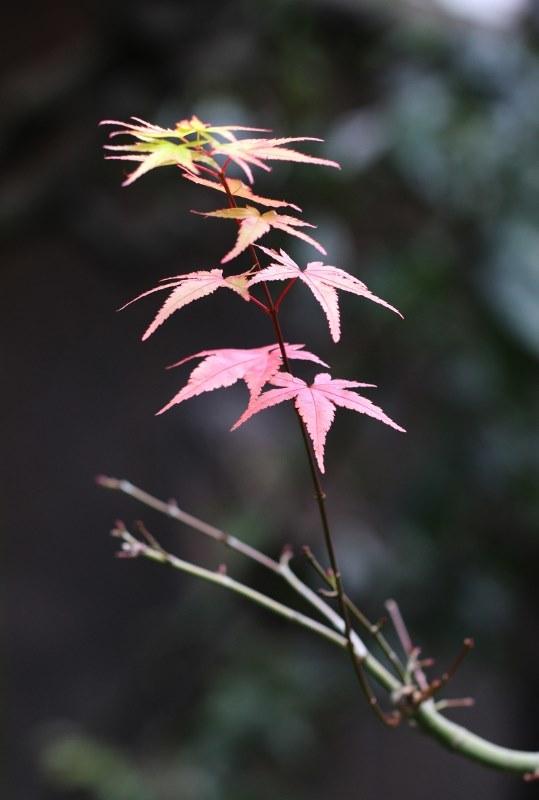 京都芸術センター(明倫小学校)_b0186148_16425171.jpg
