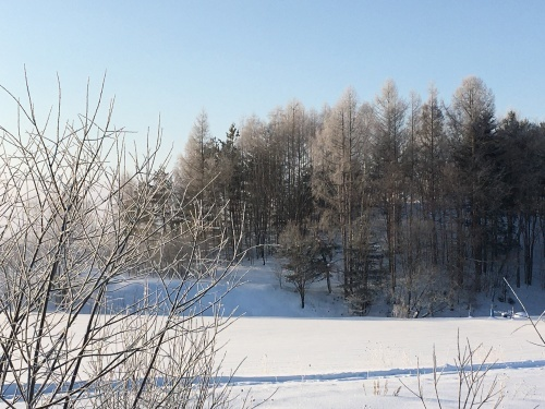 京都から雪残る美瑛へ_e0326953_15102593.jpeg