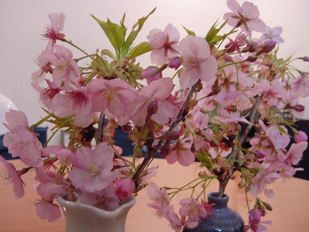 花粉症(>_<)_f0134369_22103808.jpg