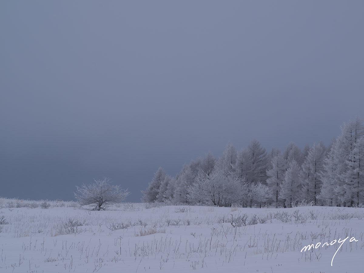 雪景色_c0085877_00275290.jpg
