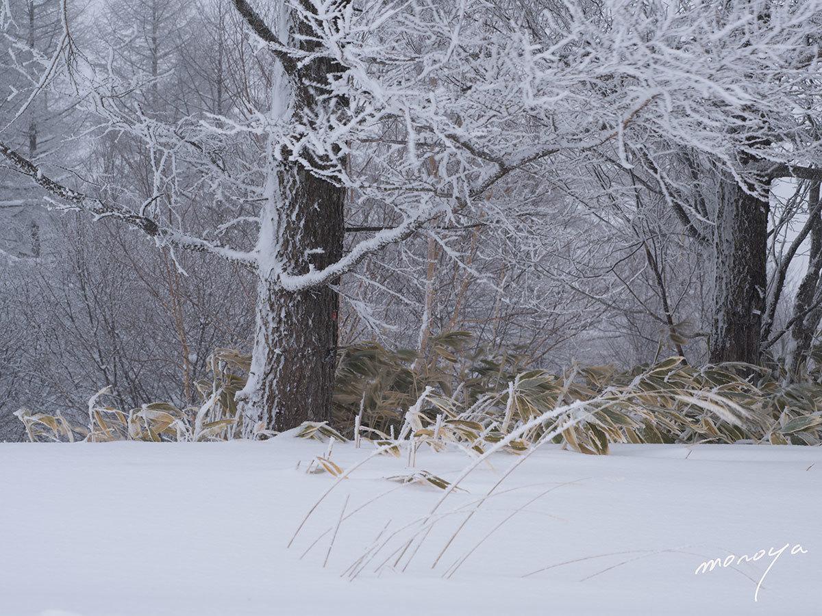 雪景色_c0085877_00275946.jpg