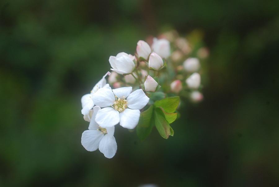 狭庭の春_c0187781_14302639.jpg