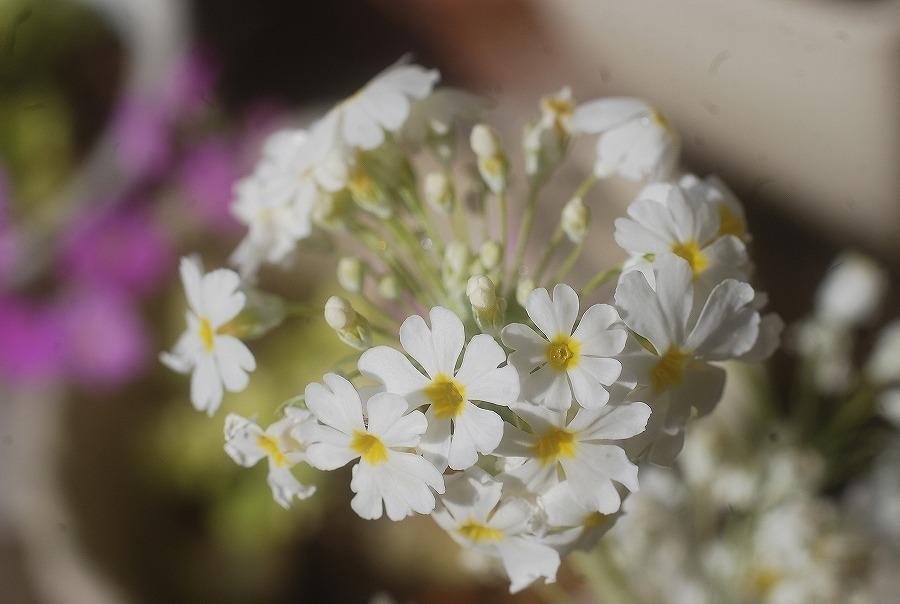 狭庭の春_c0187781_14325707.jpg
