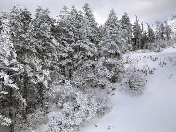 長野県と岐阜県の県境に近い山奥にあるスキー場......._b0194185_18351311.jpg