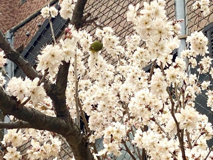 3月のお休みのお知らせ_f0232994_14264290.jpg