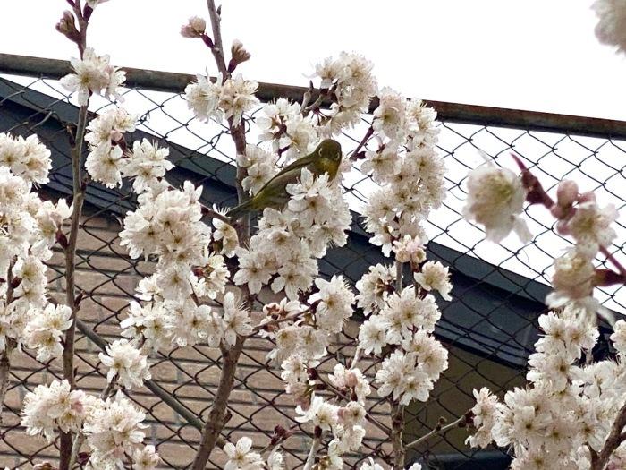 3月のお休みのお知らせ_f0232994_14295848.jpg