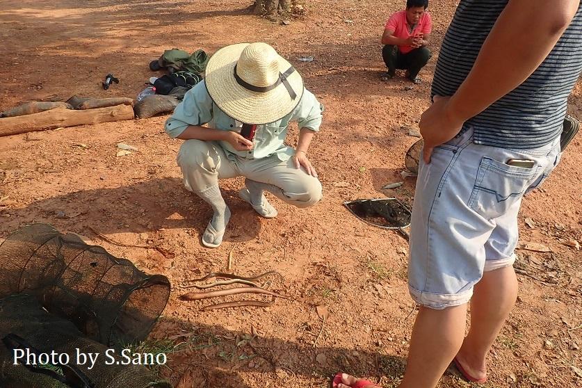 カンボジアの旅(2020年2月)~その1~_b0348205_23342154.jpg