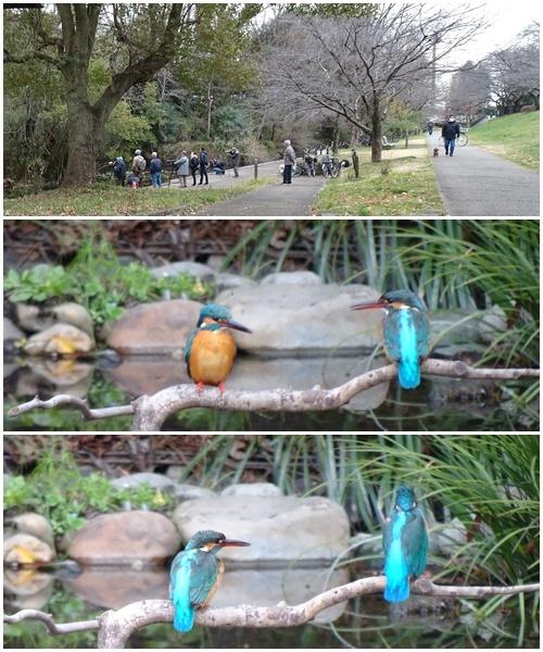 根川緑道をウォーキングし、国宝のあるお寺へ_c0051105_00464826.jpg