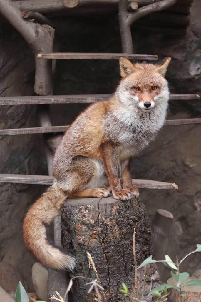 井の頭 動物園