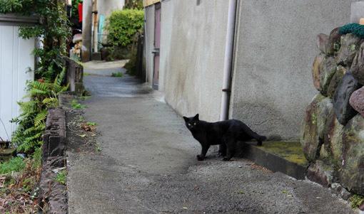 温泉と猫は似合うね☆別府・鉄輪温泉の路地裏とまったりな猫たち_a0329820_11200382.jpg