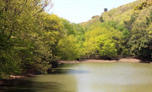 竜神の池。御神体です_a0329820_11255298.jpg