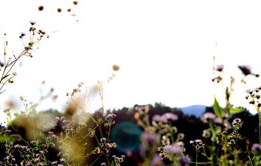 野の花にも旬がある_a0329820_11475276.jpg