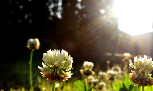 野の花にも旬がある_a0329820_11480056.jpg