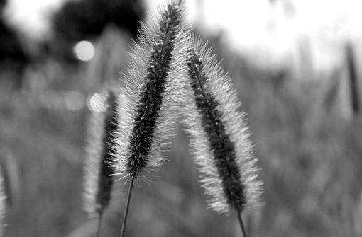 野の花にも旬がある_a0329820_11480370.jpg