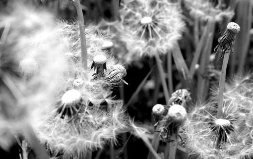 野の花にも旬がある_a0329820_11480680.jpg