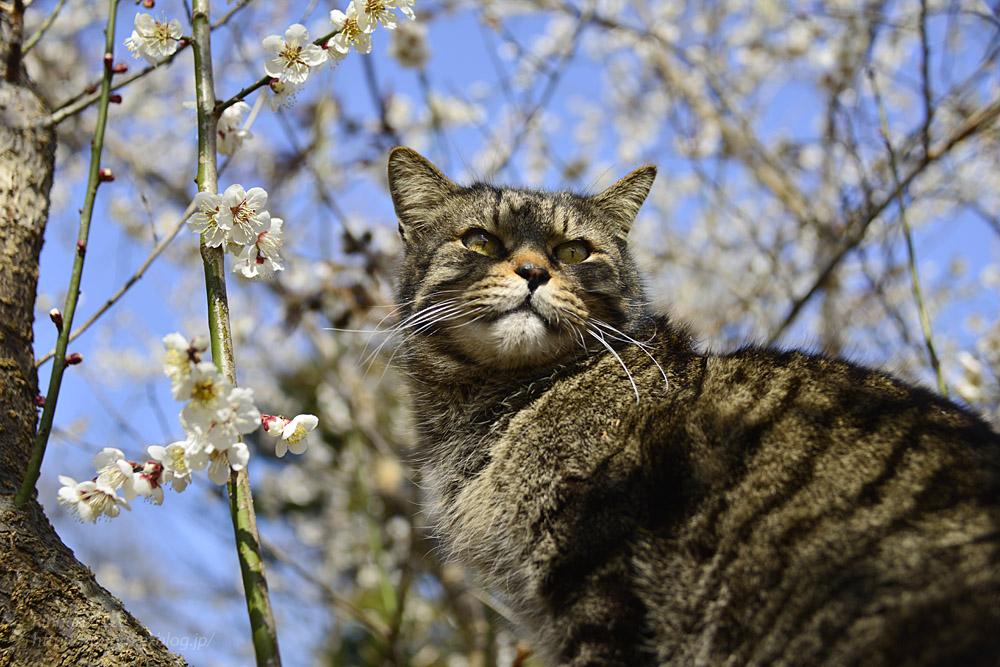 2020.3.1 猫たちと観梅会_f0250322_18195650.jpg