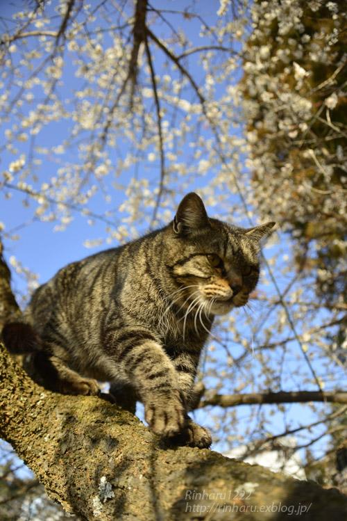 2020.3.1 猫たちと観梅会_f0250322_18202969.jpg
