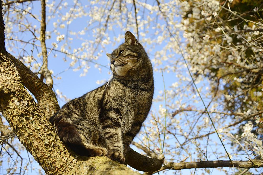 2020.3.1 猫たちと観梅会_f0250322_18203460.jpg