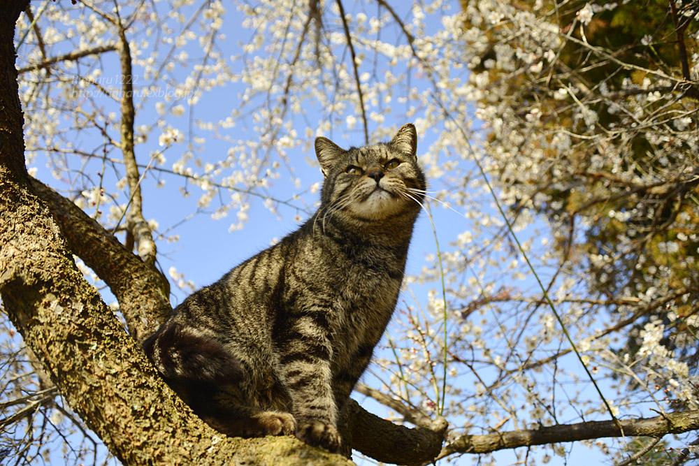 2020.3.1 猫たちと観梅会_f0250322_1820404.jpg