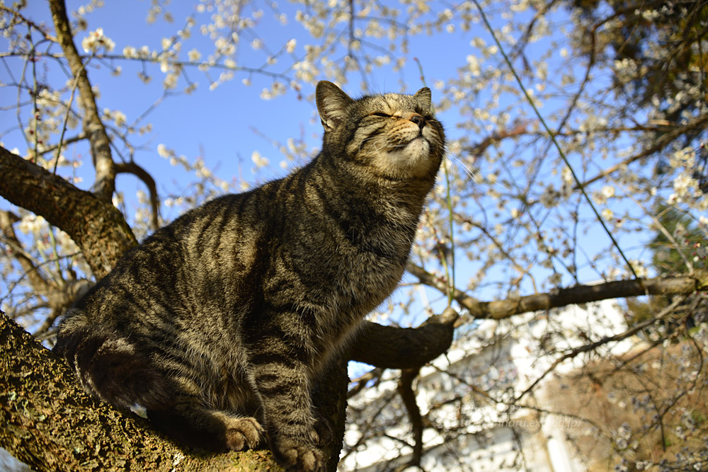 2020.3.1 猫たちと観梅会_f0250322_18204676.jpg