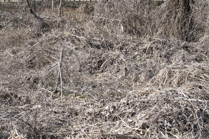 越冬トンボ観察-23 オツネントンボ(栃木-5)_f0324026_17361545.jpg