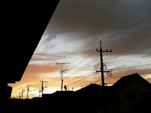 3月です!今朝の朝焼け_b0207631_08280407.jpg