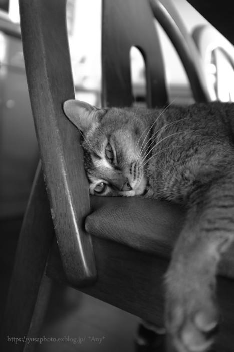 猫がいる暮らし - 25 -_e0347431_15390853.jpg