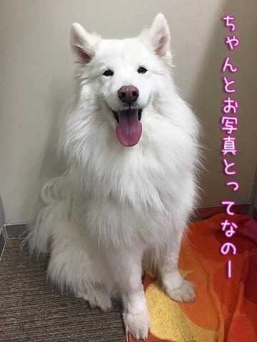 下ふ北沢にて_c0062832_17265118.jpg