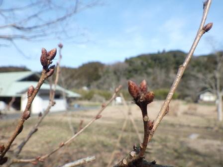 新年度行事案内公開。スミレの花も、、。_a0123836_17072220.jpg