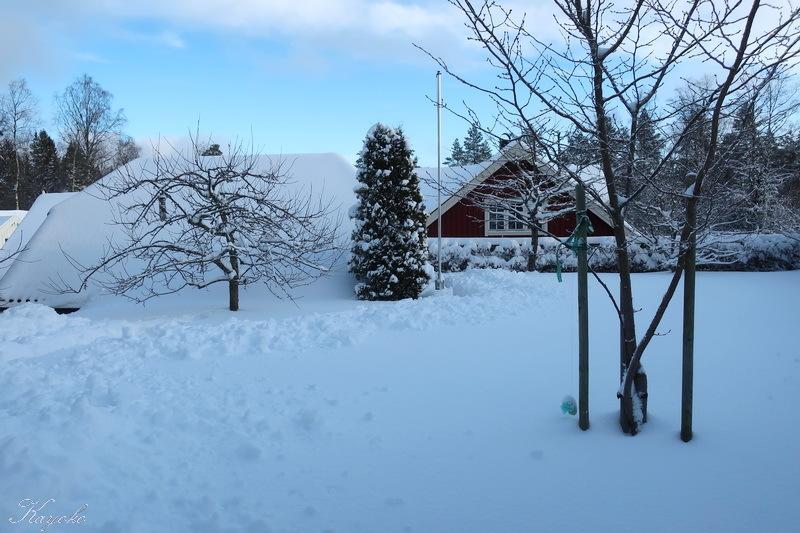 雪_a0353839_20164881.jpg