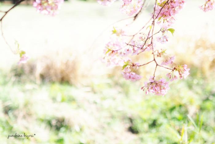 花びら_e0268051_13323155.jpg