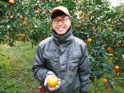 究極の柑橘『せとか』 超!ハイペースで出荷中!ご家庭用にもご贈答用にも大人気商品です!_a0254656_15102705.jpg