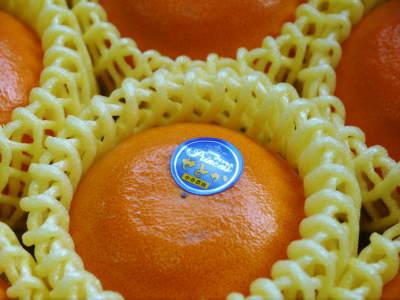 究極の柑橘『せとか』 超!ハイペースで出荷中!ご家庭用にもご贈答用にも大人気商品です!_a0254656_15231093.jpg