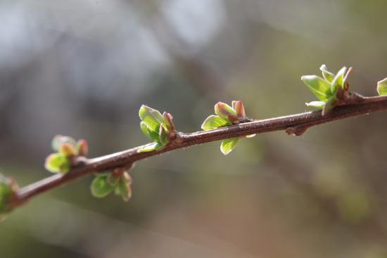 春の蠢き_e0167571_21494111.jpg