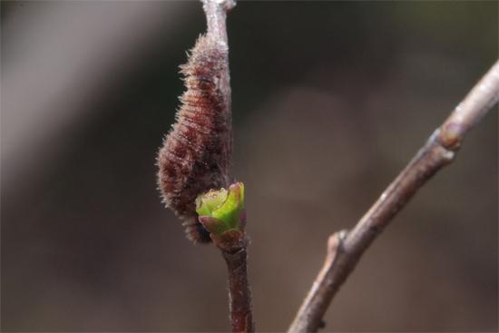 春の蠢き_e0167571_2150249.jpg