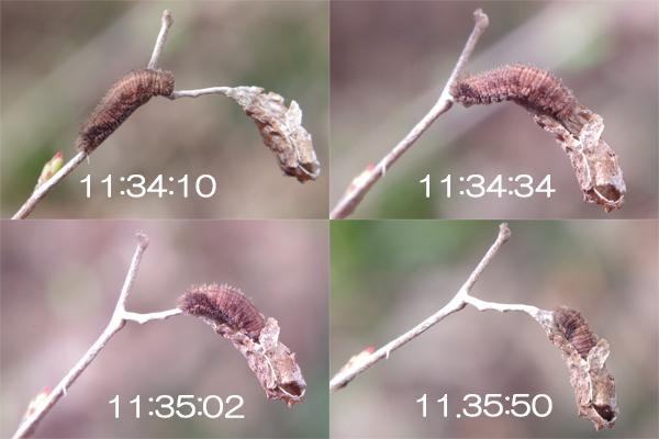 春の蠢き_e0167571_21504697.jpg