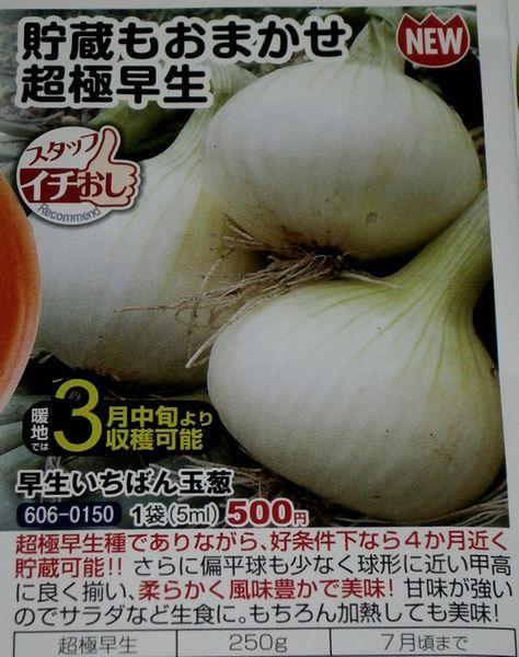 7月まで保存可能な超極早生玉葱の初収穫_f0018078_20212673.jpg