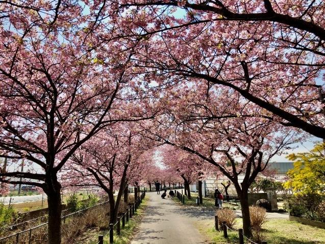 春風と早咲き桜_f0068878_08312150.jpg