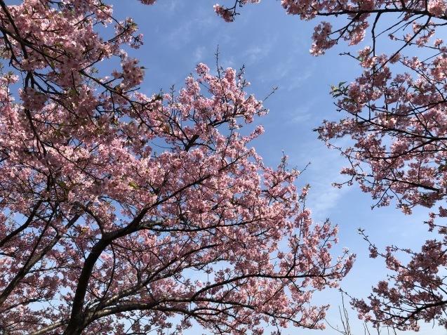 春風と早咲き桜_f0068878_08312320.jpg