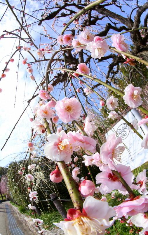 名古屋市農業センターdelaふぁーむ_f0367980_18294041.jpg
