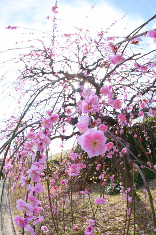名古屋市農業センターdelaふぁーむ_f0367980_18301334.jpg