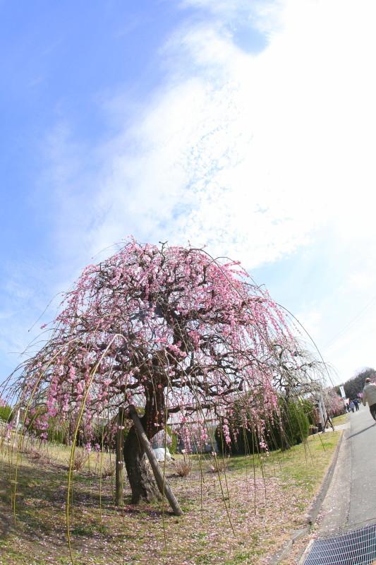 名古屋市農業センターdelaふぁーむ_f0367980_18302855.jpg