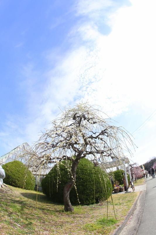名古屋市農業センターdelaふぁーむ_f0367980_18304261.jpg