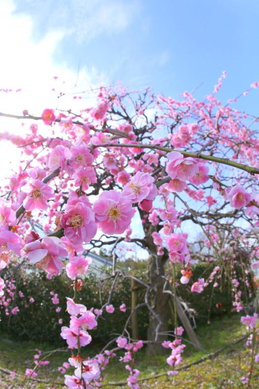 名古屋市農業センターdelaふぁーむ_f0367980_18305797.jpg
